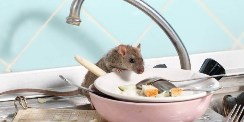 Omaha Rodent Control - Genie Pest Control